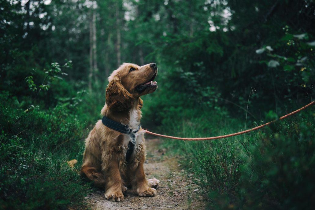 opvoeding hond