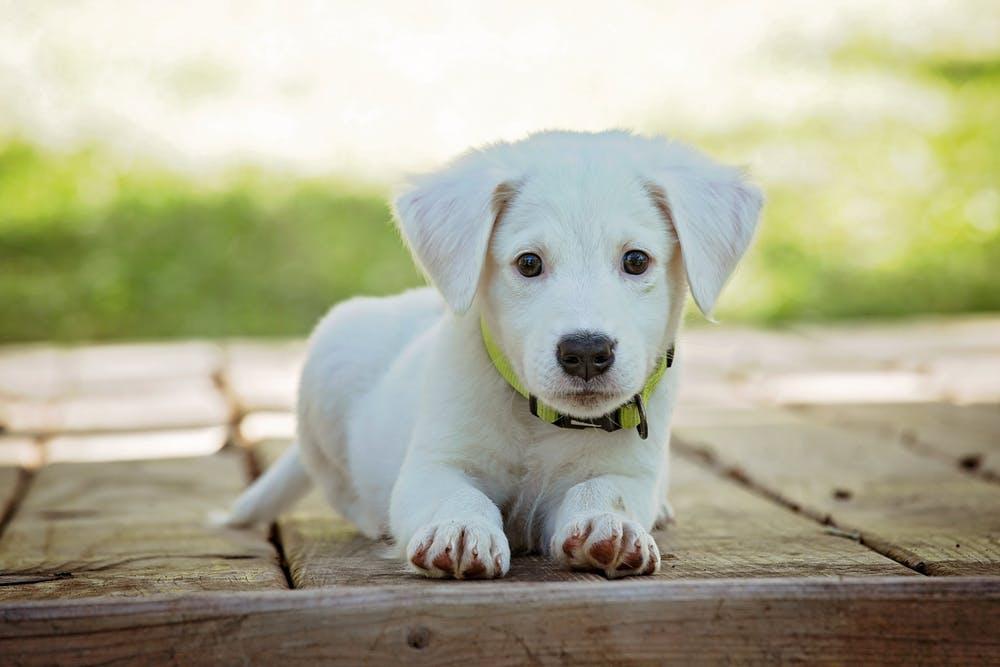 gastblog dierenverzekering