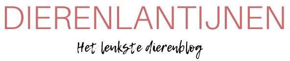Dierenlantijnen | Blog over dieren